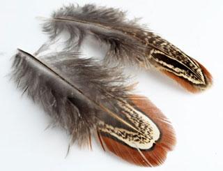 www.beadyourfashion.com - Feathers ± 40x20-100x30mm