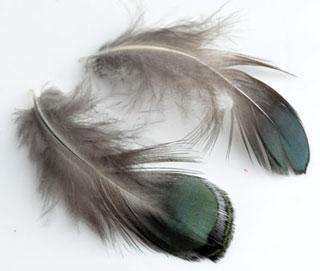 www.beadyourfashion.com - Feathers with nice lustre ± 50x15-90x30mm